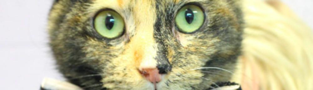 Eine Geschichte von Drei Kätzchen zu Holen! Pet Care