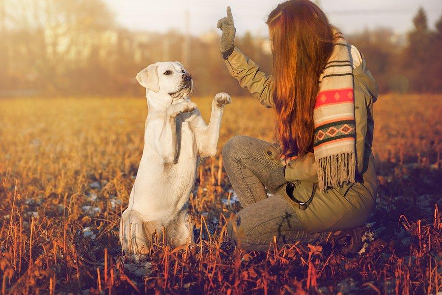 Alter Hund, neue tricks: Wie Sie wissen, wenn Ihr Hund muss Gehorsam Ausbildung