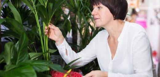 Blumenfreunden passiert häufig im Umgang mit Garten- und Zimmerpflanzen dieser Fehler